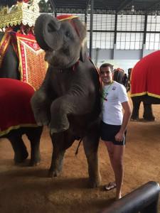 на Шоу Тайских Слонов
